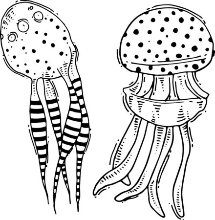 Two vector jellyfish drawings which are hand drawn.