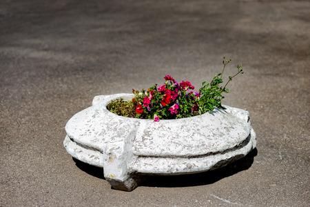 Alien flowerbed from the past. 版權商用圖片