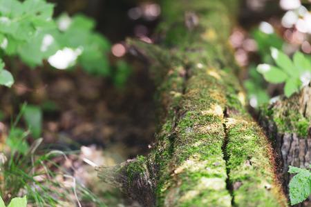 Oak in oak forest. Bark! The old tree is a whole planet. Banco de Imagens