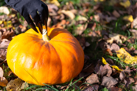 Witchs claws stroking the pumpkin.