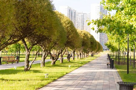 Moscow parks. The district of South Butovo. Paths, trees, benchs, and greenery in the park.
