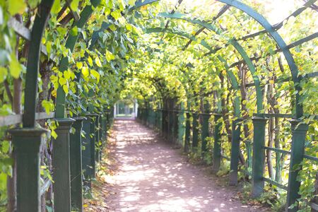 Beautiful berso. Tunnel of plants in Peterhof Park. Arches and pergolas in the garden. 스톡 콘텐츠