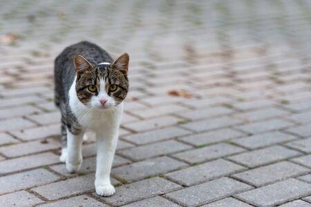 Street cat. White-leopard cat on the pavement. Street four-legged bandit. Reklamní fotografie