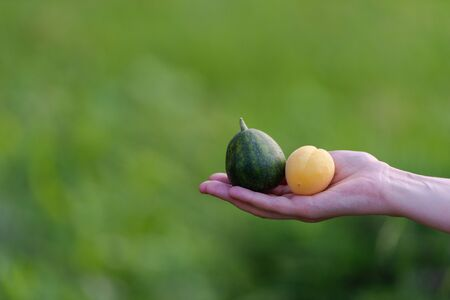 Watermelon the size of an apricot lie together in one hand.