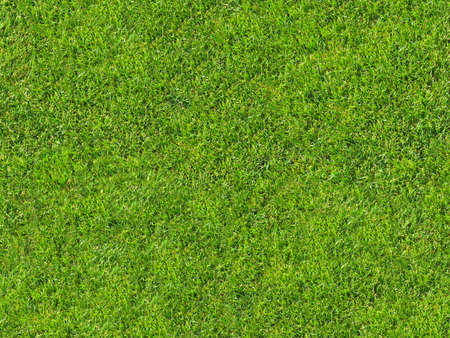Seamless grass texture for 3d or 2d texturing Stock Photo - 10440718