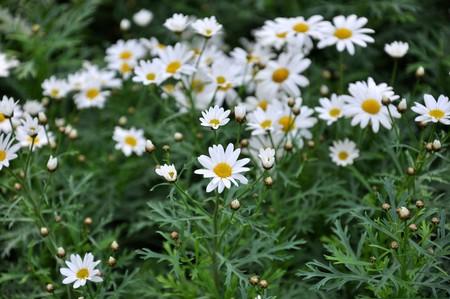 flower5 photo