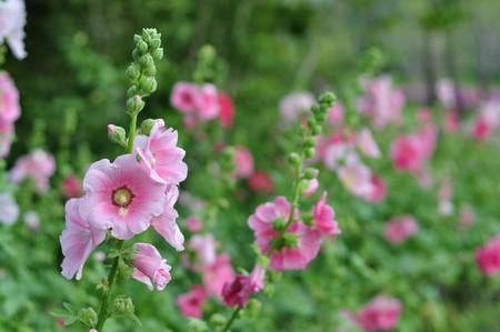 flower19 photo