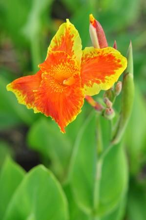 flower16 photo
