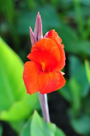 flower14 photo