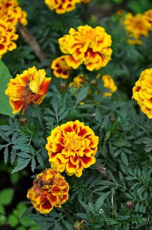 flower8 photo