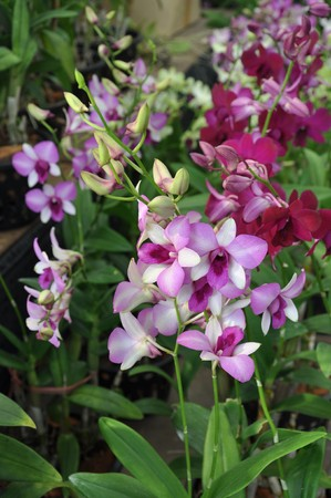 Orchid4 photo