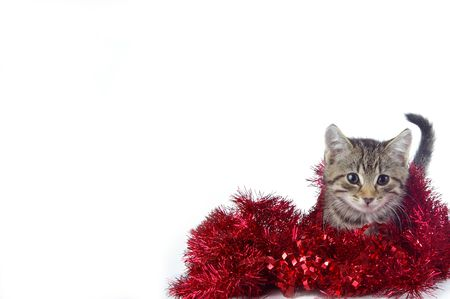 A cute kitty playing in holiday garland. White space suitable for holiday cards and designs. 版權商用圖片