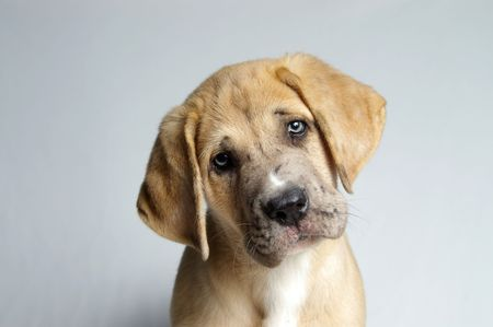 An irresistably cute puppy with a pleading look.
