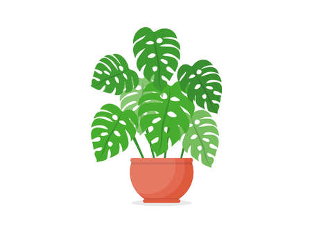 Monstera plant in a pot. Home plant. Flat vector illustration on white isolated background. Vectores