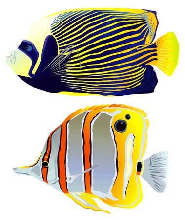 peces de agua salada: Vector brillantes peces tropicales hermosos