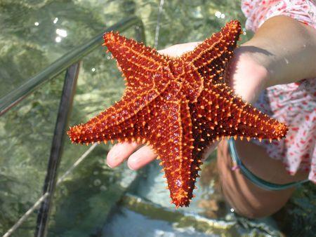 Live starfish in a hand Standard-Bild