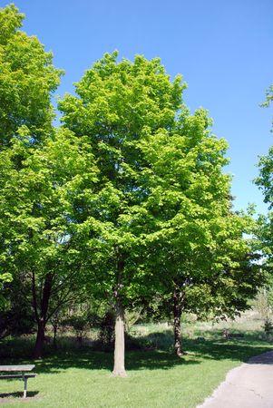 Summer park scene.  photo