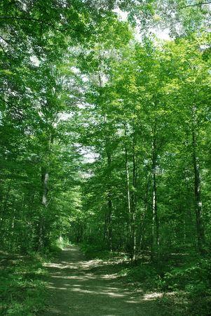 trackless: Summer forest landscape