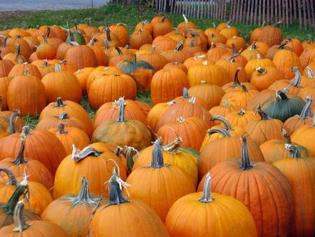 Pumpkins Standard-Bild