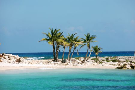 Coconut palm trees on a island Stock Photo - 2056938