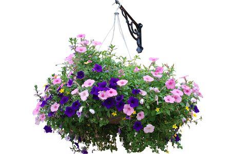 화이트 절연 꽃 바구니