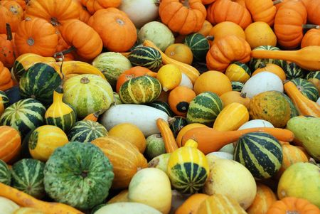 Pumpkins and squash - fall gourd background