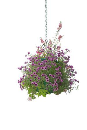Flower hanging basket isolated on white background