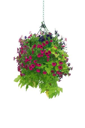 Flower basket hanging isolated