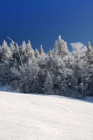 edge of the ice: Ski slope on tree covered mountain side