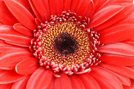 Red flower background Stock Photo - 6252665