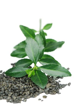 hojas de te: T� verde deja en blanco  Foto de archivo