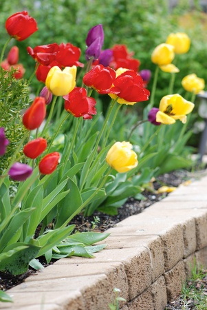 appeal: Multicolored tulips in a landscaped garden Stock Photo