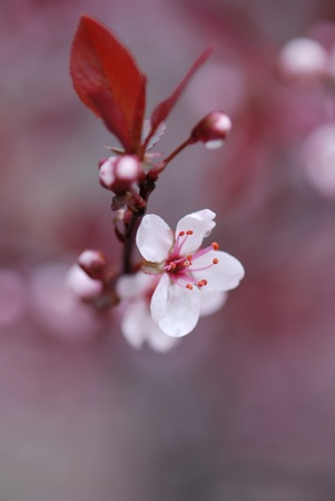 Blooming tree with flowers