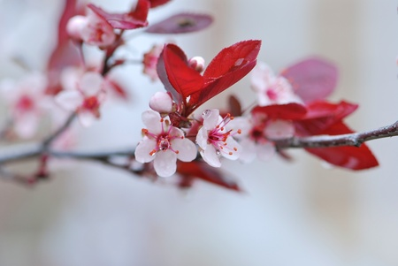 Pink flowers on a blooming tree