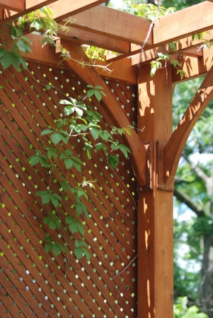 trellis: Pergola covered by hanging grapevines Stock Photo