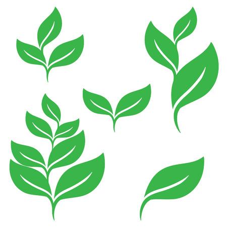 Set of green leaves design elements Ilustração