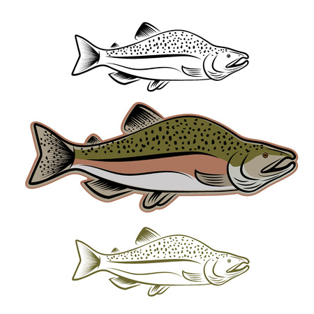 sockeye: salmon fish illustration set