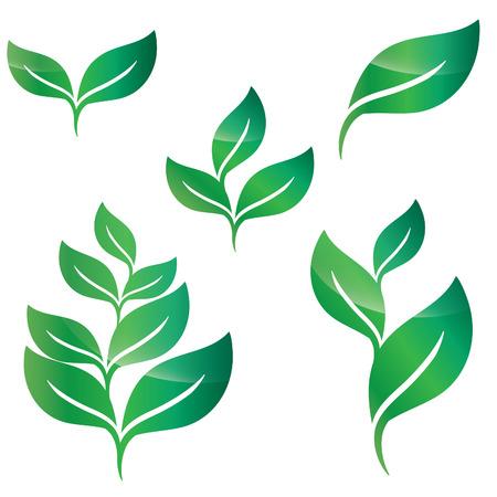 vegetate: Set of green leaves design elements Illustration