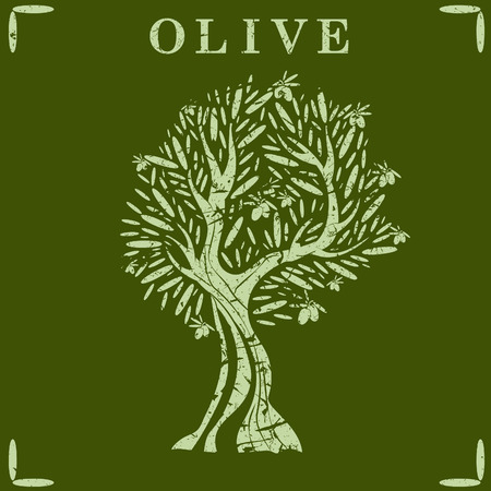 olive trees: Illustration of olive tree. Vector Illustration