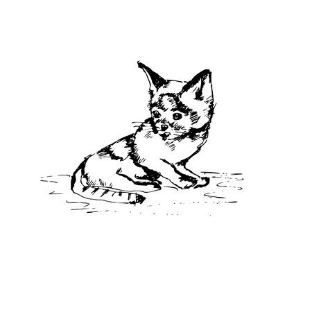 moggie: Illustration of hand drawn cat. vector