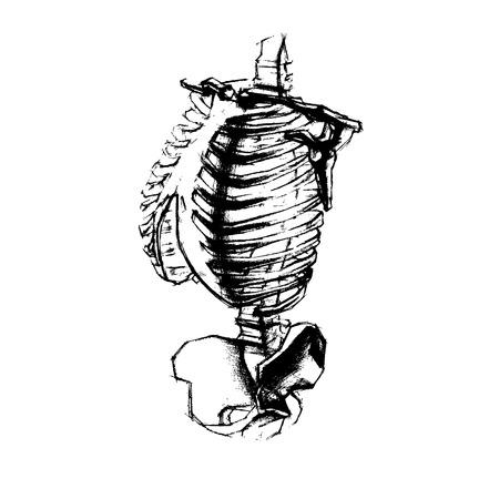 torso: Illustration of academic drawing human torso. vector