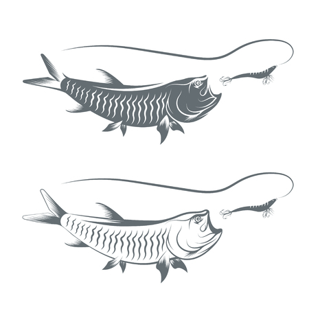 coastal: tarpon fish and lure template vector illustration