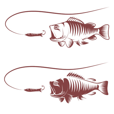 spawning: sea bass and lure template vector illustration
