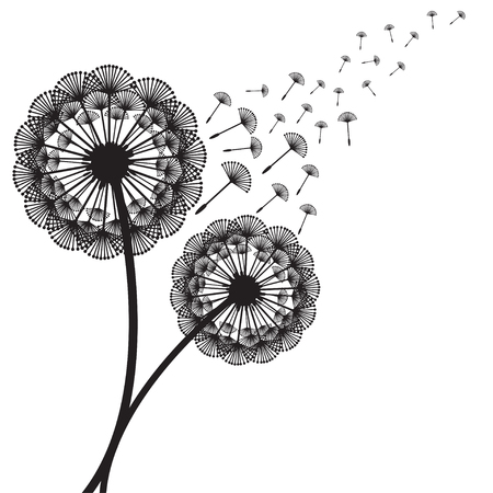 dandelion: Illustration of concept dandelion. Vector Illustration