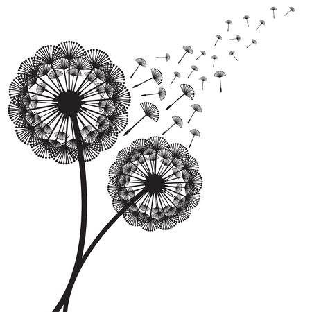 dandelion seed: Illustration of concept dandelion. Vector Illustration