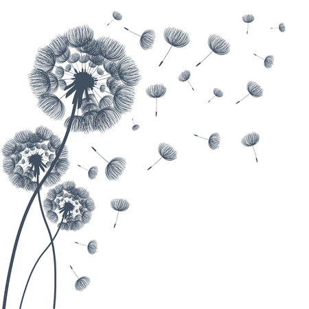 dandelion flower: Abstract fluffy dandelion flower. Vector illustration
