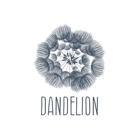dandelion flower: Abstract fluffy dandelion flower logo. Vector illustration