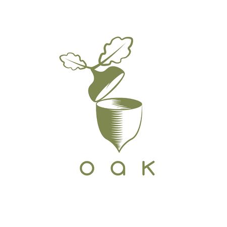 vector design template of acorn and oak leaf Illustration