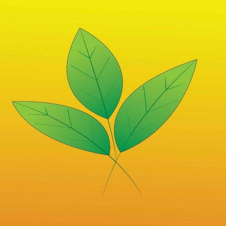 green leaf vector illustration  Illustration