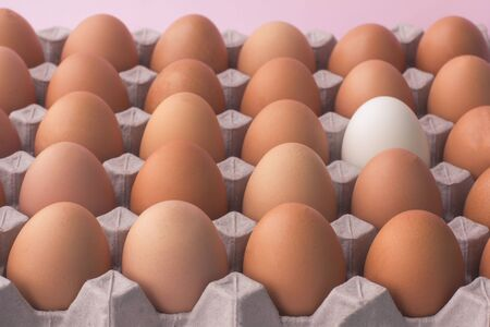 Close up of chicken eggs in carton box on pink background. One egg is another colour, concept